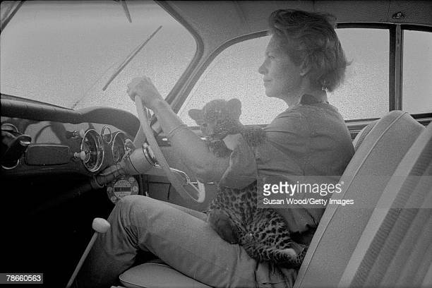 Photograph of the Marchesa Sieuwke Bisleti with a leopard cub on her lap as she drives in her car on her farm Kenya June 12 1960