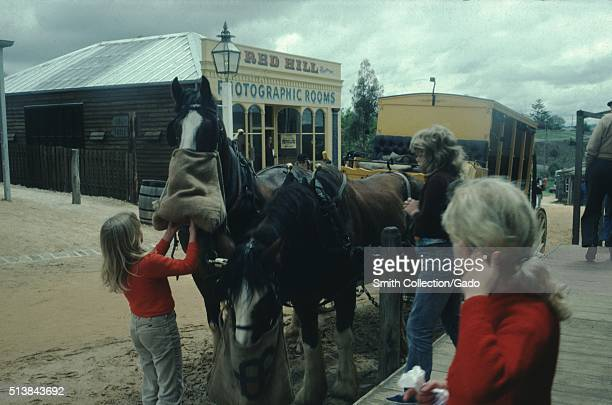 A photograph of three young girls feeding two horses the horses both have feed sacks attached to their tack they are a team used to pull the yellow...