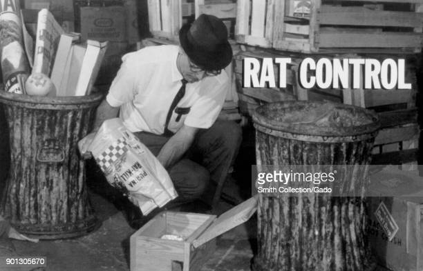 Photograph showing a man kneeling pouring out a bag that reads Rat Kill into a rat box between trash cans in an alleyway as an attempt to control the...