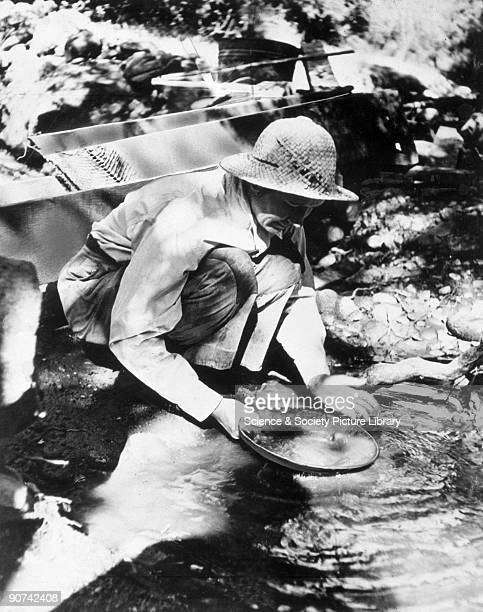 Photograph showing Alice Kimball panning a sample of gold discovered on her ranch near San Diego California Mrs Kimball turned down offers of...