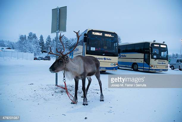 Photograph taken in the parking lot of the airport Saariselkä in Lapland, Finland.