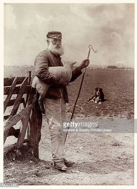 A photograph titled 'Ninety and Nine' showing an elderly shepherd carrying a lamb and holding a crook taken by Colonel Joseph Gale in 1890 This image...