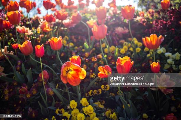 photograph with lots of various flowers - mannheim stock-fotos und bilder