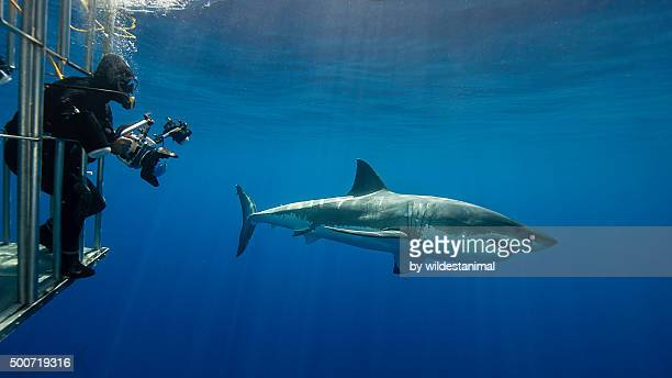 Photographer And Shark