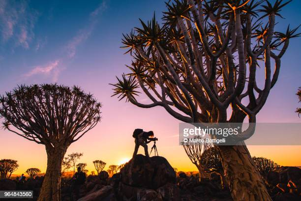 photographer at work at sunset in quivertree forest, namibia - namibia fotografías e imágenes de stock