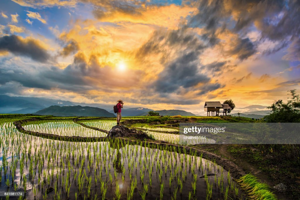 A Photographer bagpacker travel and take a caption of beautiful step of rice terrace paddle field during sunset in Chiangmai, Thailand. Ciangmai is the most of beautiful in nature place in Thailand, Southeast Asia. Travel concept. : Stockfoto