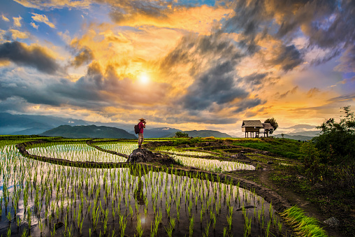 A Photographer bagpacker travel and take a caption of beautiful step of rice terrace paddle field during sunset in Chiangmai, Thailand. Ciangmai is the most of beautiful in nature place in Thailand, Southeast Asia. Travel concept. - gettyimageskorea