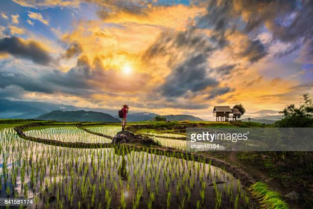 a photographer bagpacker travel and take a caption of beautiful step of rice terrace paddle field during sunset in chiangmai, thailand. ciangmai is the most of beautiful in nature place in thailand, southeast asia. travel concept. - provincia di chiang mai foto e immagini stock