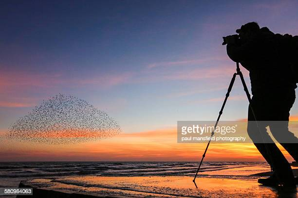 Photographer capturing starlings at sunset