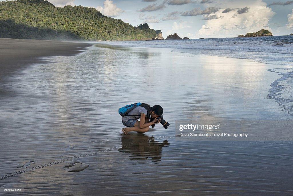 Photographer following baby turtle heading to sea : Stock Photo