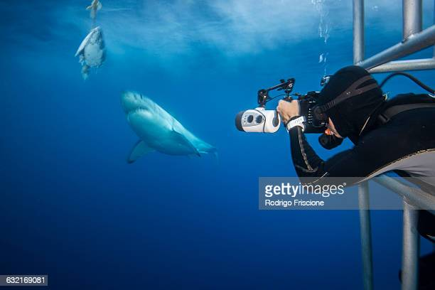 Photographer leaning towards a white shark (Charcharodon carcharias) during a baited cage dive, Guadalupe Island, Mexico