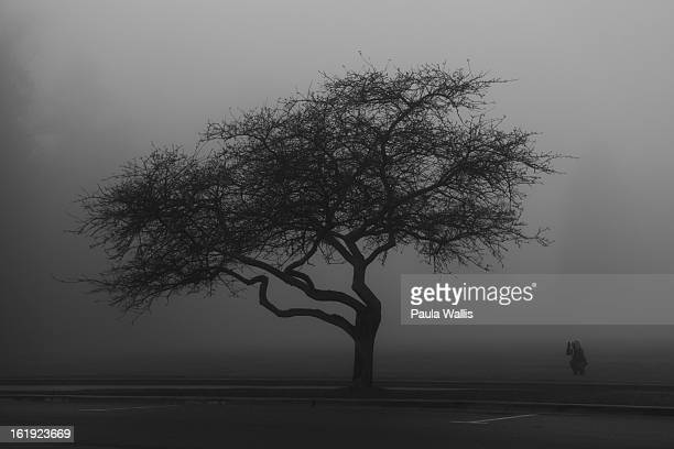CONTENT] A photographer lines up a shot of a lone tree on a foggy morning in Stanley Park Vancouver BC