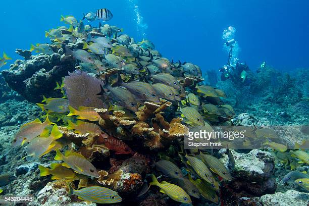 Photographer on coral reef.