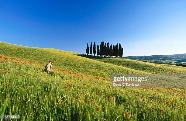 Photographer shooting poppy field and cypress trees, near Montalcino.
