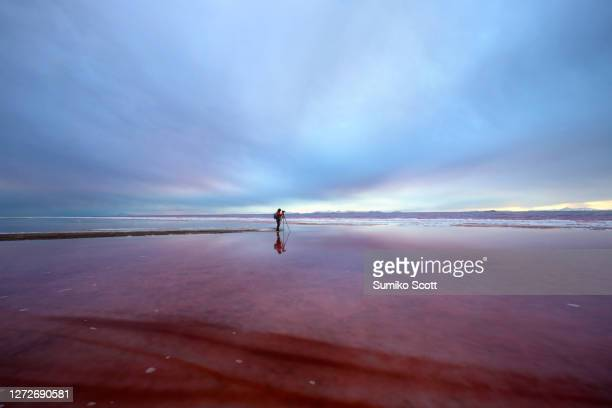 photographer standing in rose color water of the great salt lake, ut - utah stock pictures, royalty-free photos & images