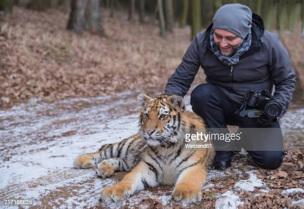 Photographer stroking young Siberian tiger in forest