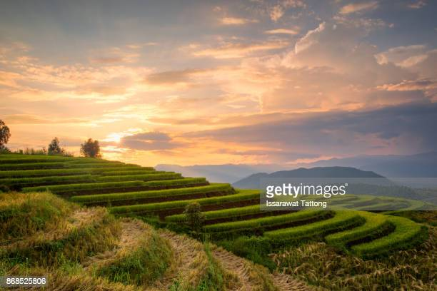 A Photographer take a caption of beautiful step of rice teerace during sunset