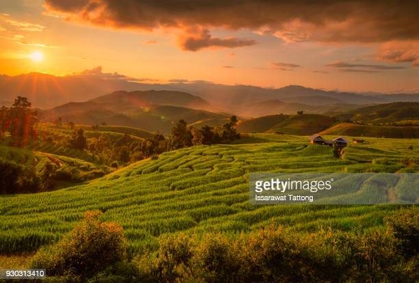 A Photographer take a caption of beautiful step of rice terrace during sunset