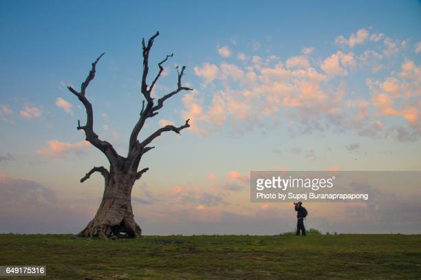 Photographer take photo of dead tree at taungthaman lake near u bein bridge , Mandalay , myanmar