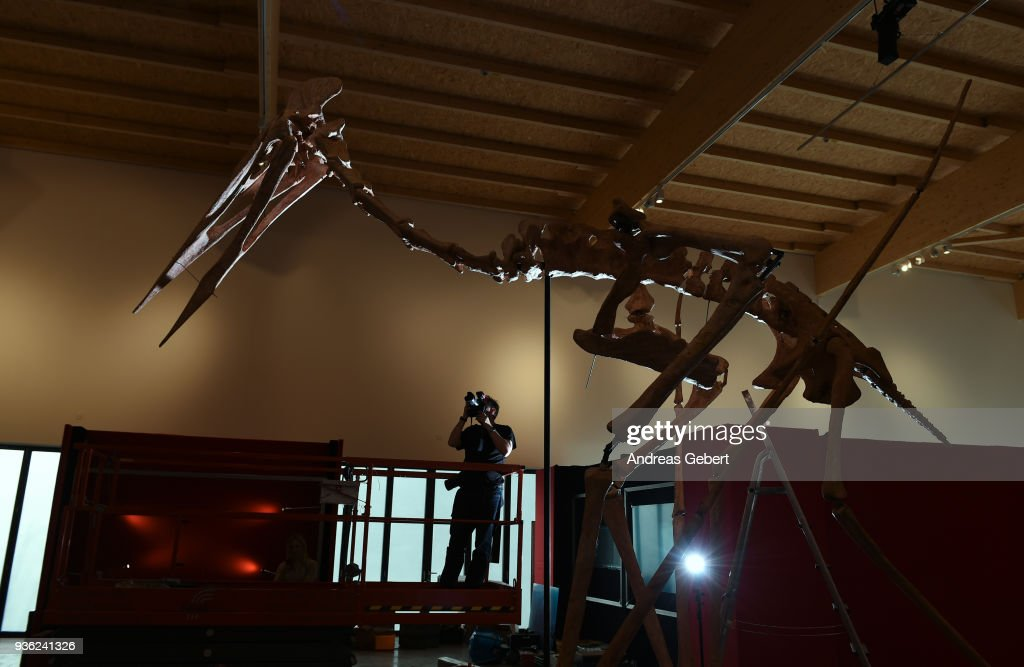 A photographer takes a picture of a representation of what museum officials claim is the world's biggest discovered winged dinosaur prior to its exhibition at the Altmuehltal Dinosaur Museum on March 21, 2018 in Denkendorf, Germany. Bones of the dinosaur were found in the Transylvanian region of Romania and the museum has dubbed the creature 'Dracula.' The species of the dinosaur is so far unnamed, though it is part of a class of flying dinosaurs called Pterosaurs and is approximately 66 million years old. The wingspan of the reconstructed pterosaur measures 12 meters and when standing the creature measures three and a half meters in height. Original bones of the pterosaur are displayed in a separate display cabinet at the museum. Whether this new species could actually fly is unclear.