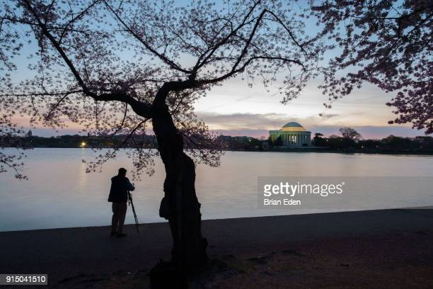 A photographer takes photos of the Jefferson Memorial during the Cherry Blossom Festival in Washington DC