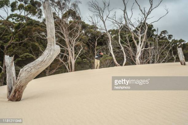 photographer taking photographs of sand dunes, tasmania - heshphoto stockfoto's en -beelden