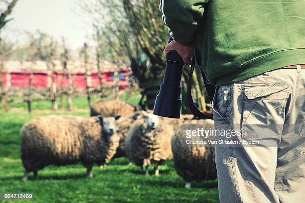 Photographer With Camera In Hand Standing Next To Flock Of Sheep