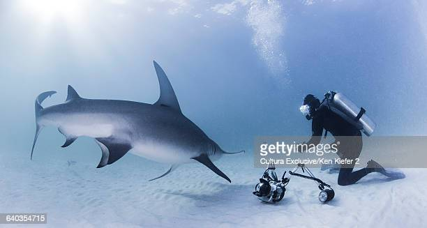 Photographer with Great Hammerhead Shark