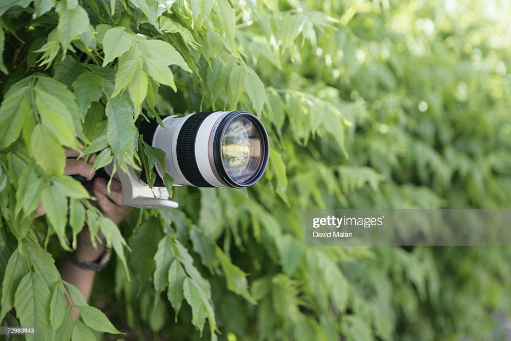 Photographer with long lens taking photographs from bushes : Stock Photo