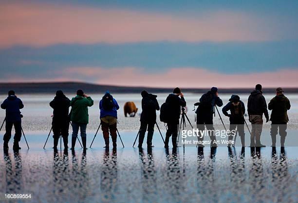 Photographers, brown bear, Lake Clark National Park, Alaska, USA, Ursus arctos,