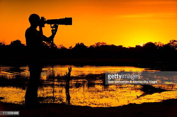 photographer's paradise d90_1075 - moremi wildlife reserve stock photos and pictures