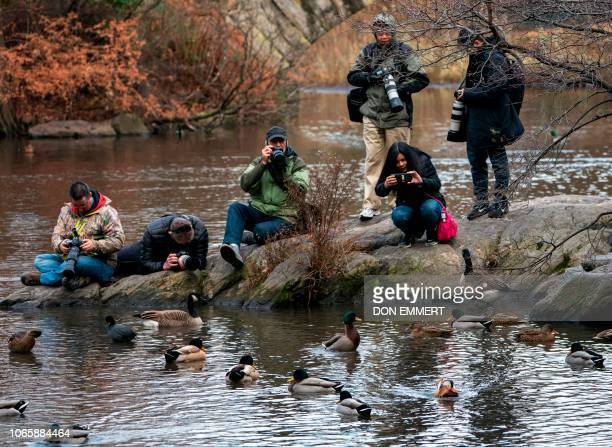 Photographers try to capture images of the now famous Mandarin Duck nicknamed Mandarin Patinkin makes an appearance November 27 2018 at a pond in...