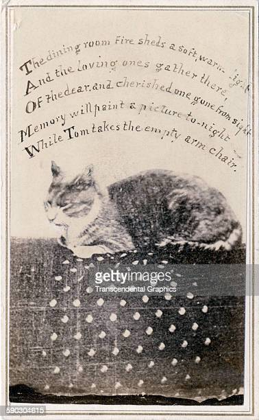 Photographic Cartedevisite Of A Scene Featuring Sleeping Cat With Poem Written Above Circa 1860