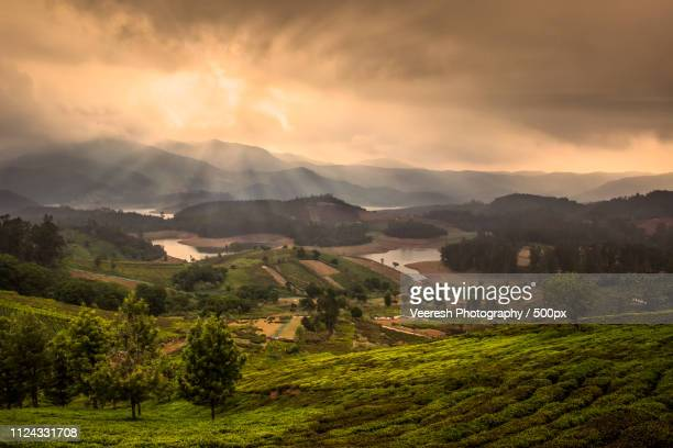photographic image - plantation stock pictures, royalty-free photos & images