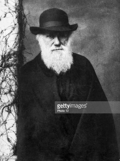 Photographic portrait of Charles Darwin English naturalist and geologist. Photographed by Julia Margaret Cameron British photographer. Dated 1870.
