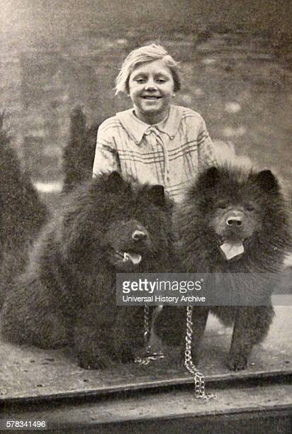 Photographic print of two Chinese Chow Chow dogs. This dog breed originates from northern China. Dated 20th Century.