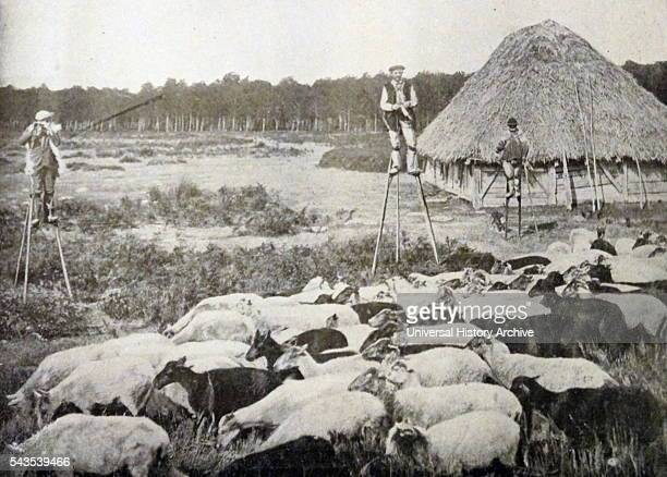 Photographic print of typical Landals shepherds on stilts in Landes of Gascony France Dated 19th Century