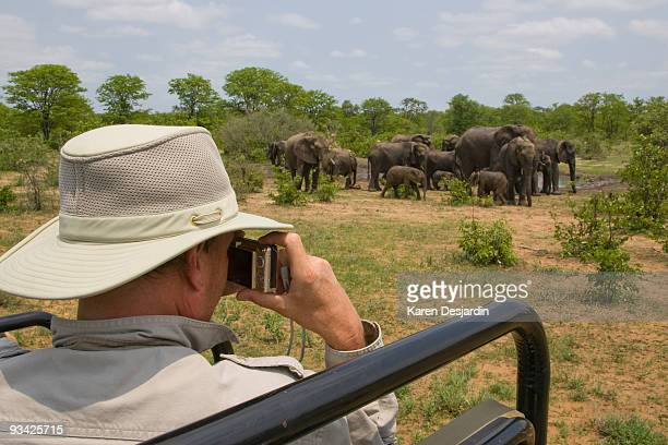 photographing elephants on safari  - kruger national park stock pictures, royalty-free photos & images
