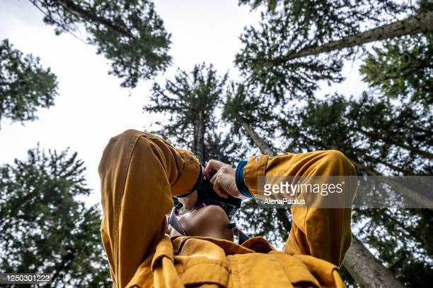photographing tree canopies, view from below - photographer stock pictures, royalty-free photos & images