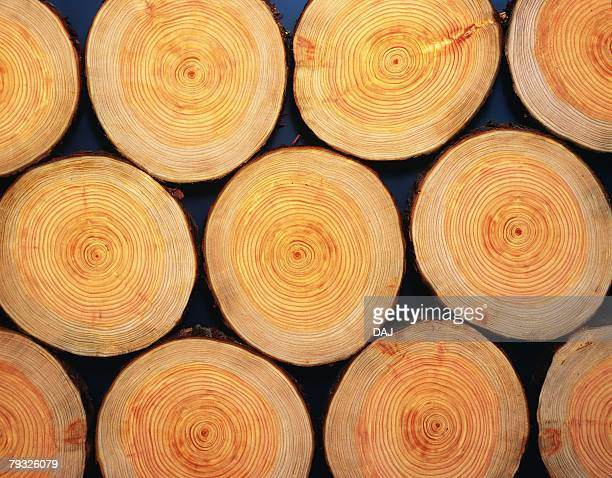 Photography of logs of Japanese cypress, Close Up