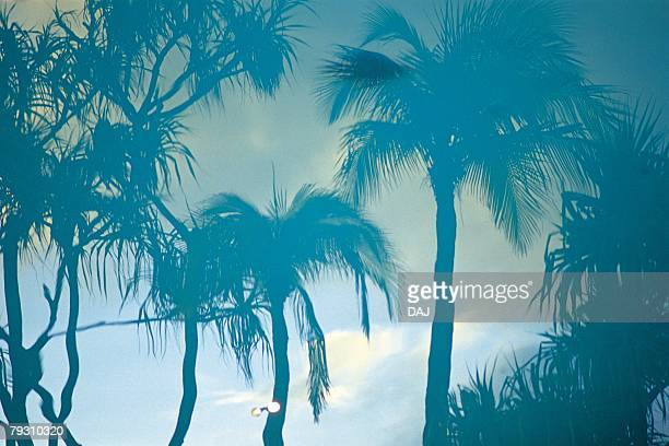 Photography of palm trees and the sky, Low Angle View