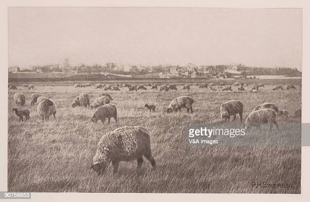 Photogravure Photograph by Peter Henry Emerson An illustration from �Pictures from Life in Field and Fen�