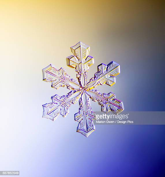 Photo-microscope view of a real snowflake showing the classic 6-sided star shape.