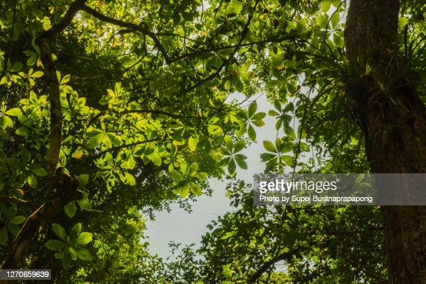 photos of the tropical rainforest on a hot sunny day in summer.tropical evergreen forest or rain forest in south east asia - southeast stock pictures, royalty-free photos & images