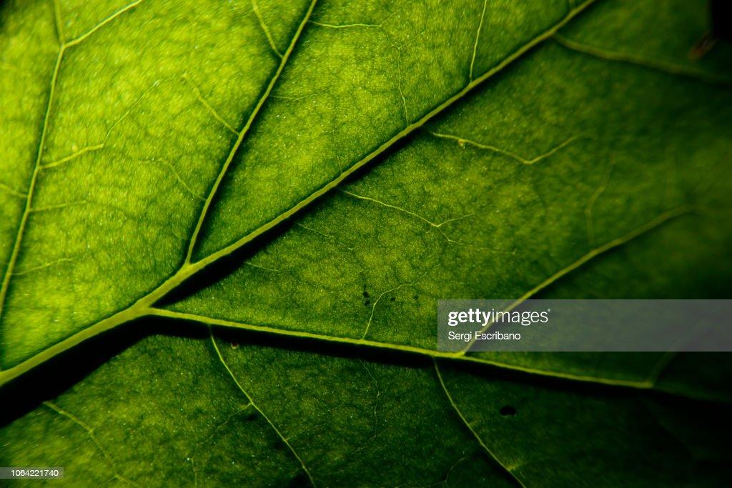 photosynthesis : Foto de stock
