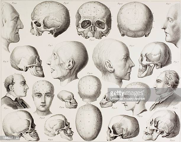 Phrenological Illustration Showing The Psychological Relations Of The Brain From A 19Th Century Print