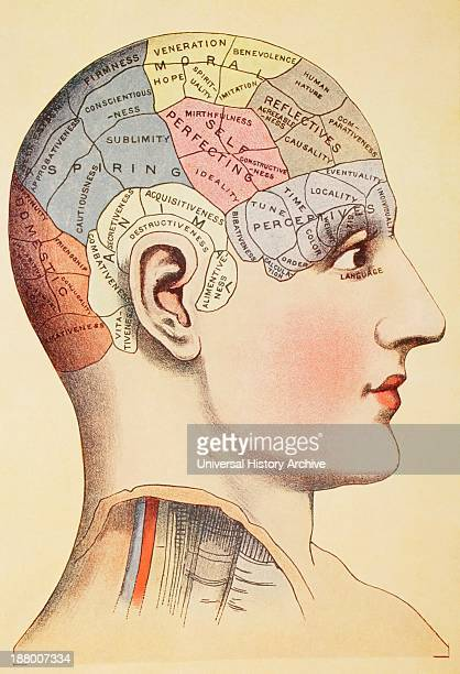 A Phrenological Map Of The Human Brain From Virtue's Household Physician Published London 1924