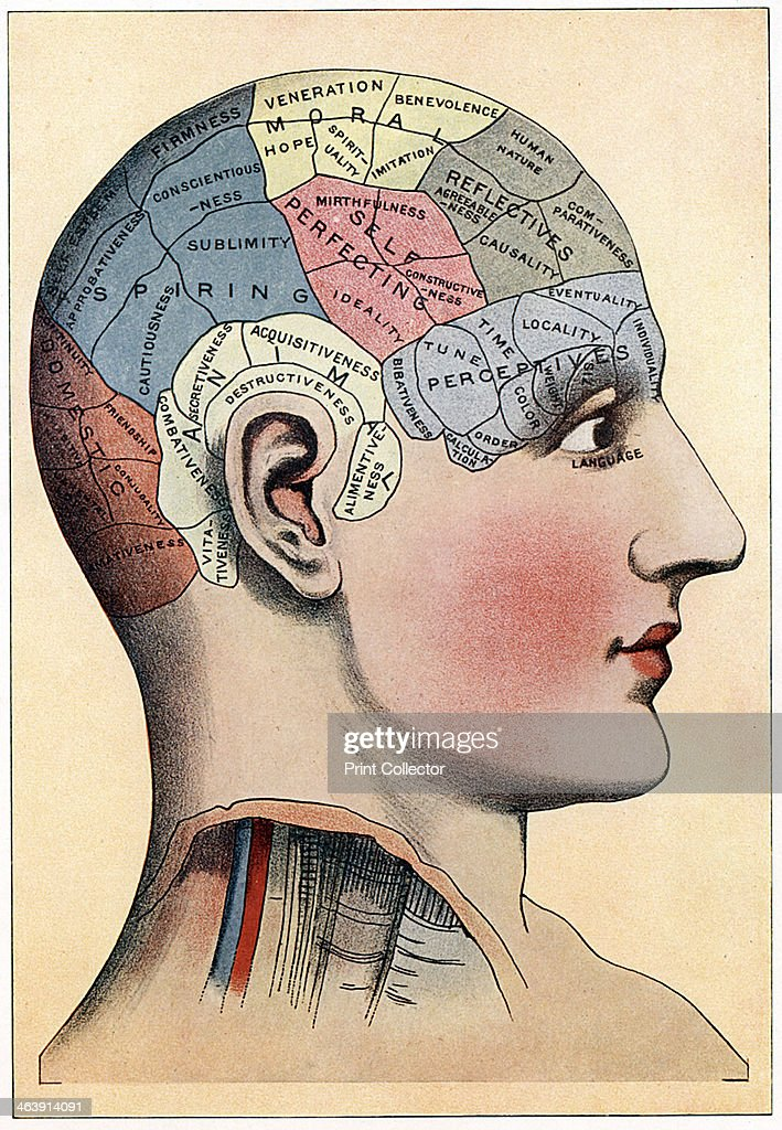Phrenology chart, showing presumed areas of activity of the brain, c1920. Phrenology was a theory, propounded by the German physician Franz Joseph Gall in around 1800, that you could judge a person's emotional and intellectual characteristics by the shape of their cranium. Although not based on fact, the theory became extremely popular.