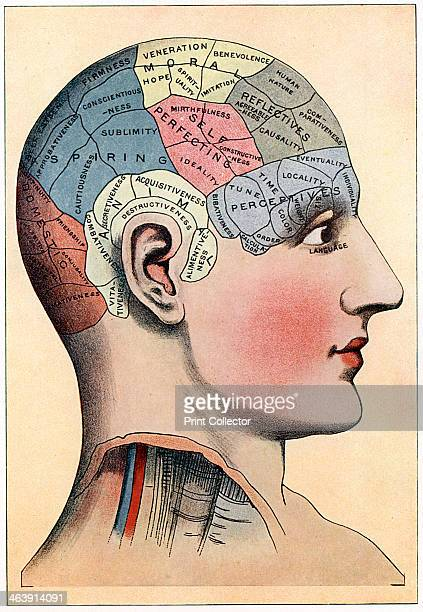 Phrenology chart showing presumed areas of activity of the brain c1920 Phrenology was a theory propounded by the German physician Franz Joseph Gall...