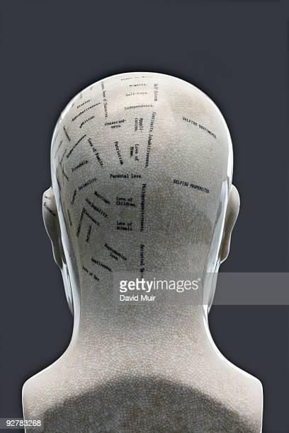 phrenology head back view
